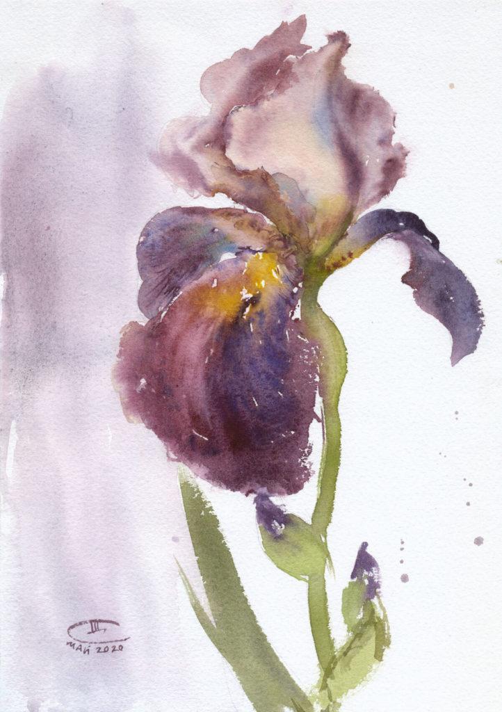 Пурпурный ирис. Лист 1