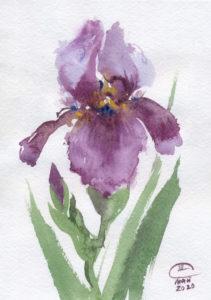 Пурпурный ирис. Лист 2