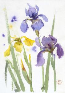 Ирисы голубые и желтые. Лист 1