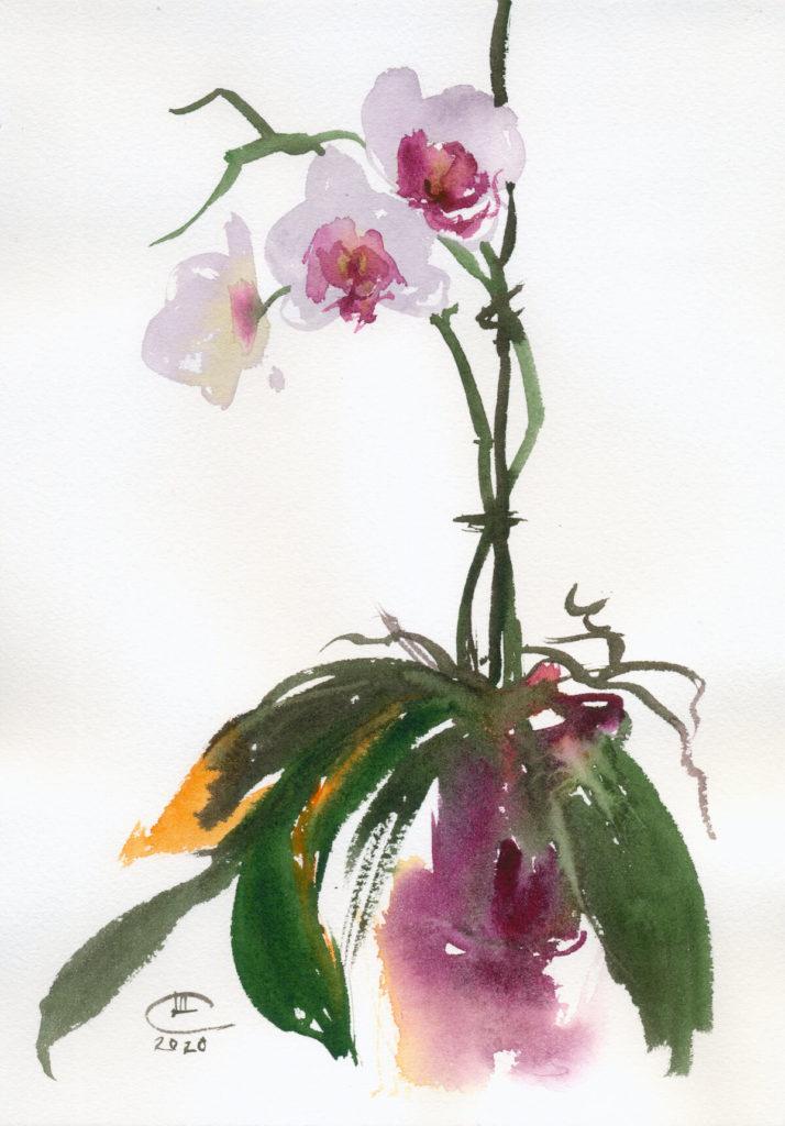 Орхидея. Лист 1