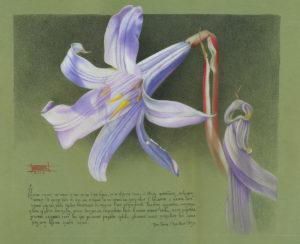 Из серии «Цветы»